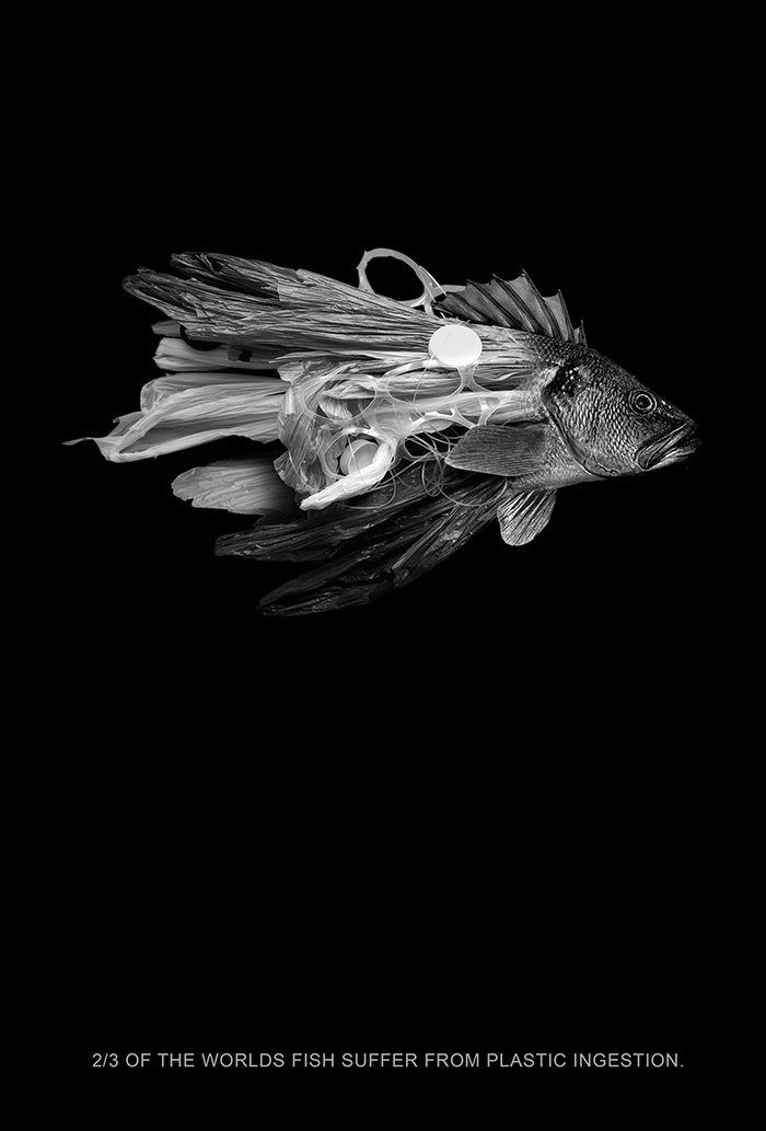 Plastic Fish: Segunda Lamada – 2015
